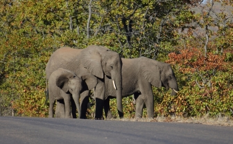 éléphants, Kruger NP, South Africa