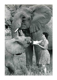 DSWT, Daphne Sheldrick, elephants, orphaned elephants, Kenya, Nairobi