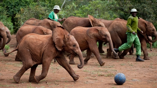 play time, football for elephants, Nairobi orphanage, DSWT, Kenya