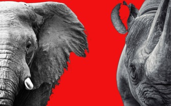 poaching, rhinos, elephants, Africa, bloody pictures, braconnage, barbarie, endangered species