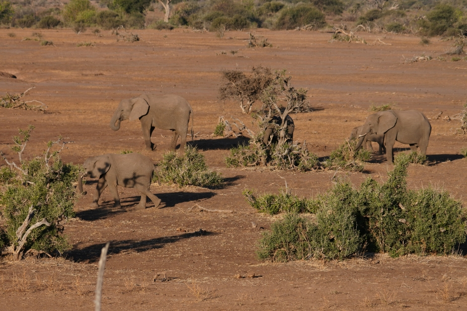 elephants, The Land of Giants, Mashatu game Reserve, Botswana