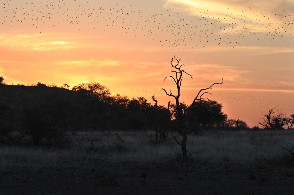 Mashatu Game Reserve, Botswana, sunset