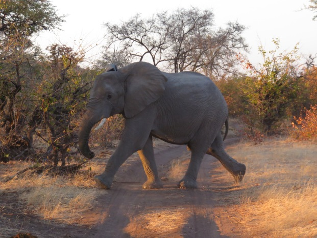 elephant, Mashatu Game Reserve, Botswana, safari, game drive, wildlife, Land of Giants