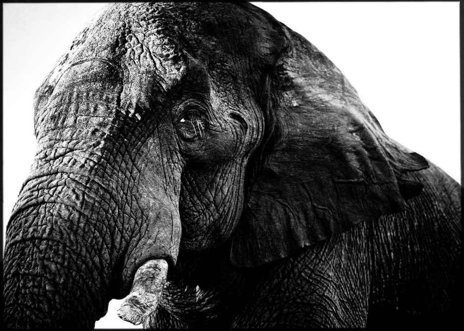 elephant, Laurent Baheux, black and white photography, wildlife, Africa