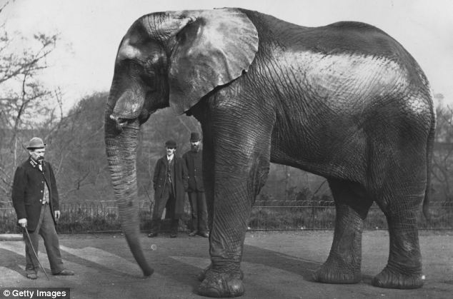 Jumbo, Matthew Scott, London Zoo, elephant