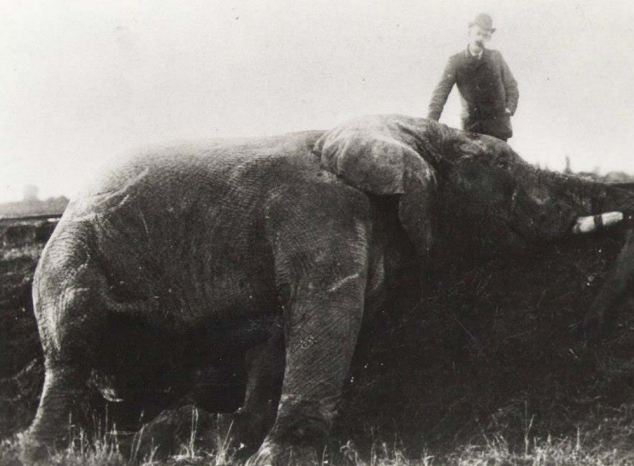 Jumbo, dead elephant, train accident, Barnum Circus, Matthew Scott