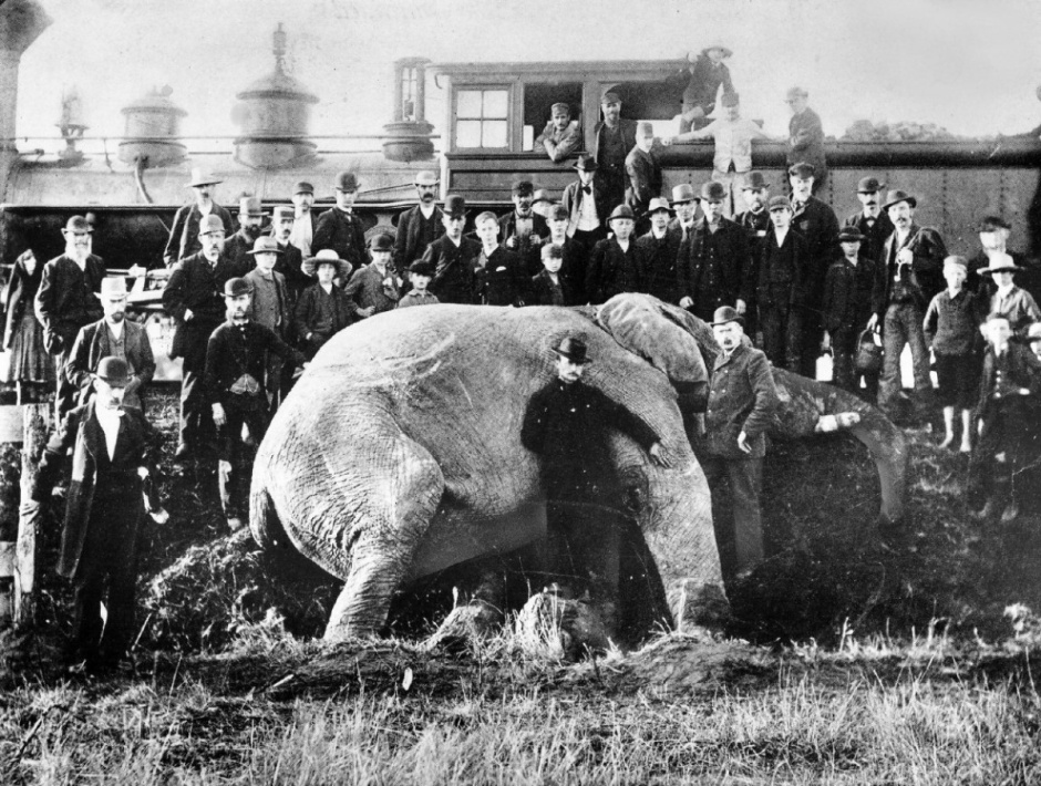 Jumbo, death of the elephant, St. Thomas Ontario, Barnum Circus, Matthew Scott