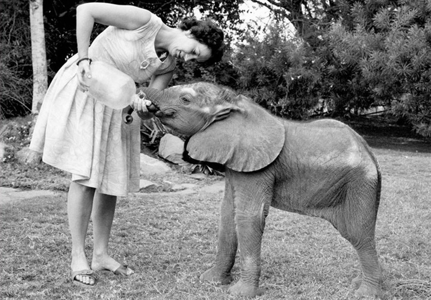 Daphne Sheldrick, DSWT, milk for elephants, orphan elephant, Kenya