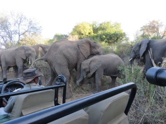 elephants, close encounter, Karongwe Game Reserve, private game reserve, South Africa