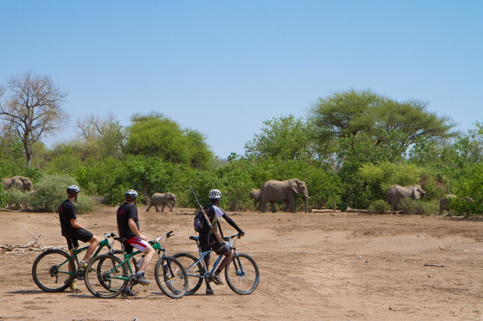 mountain bike safari, Mashatu Game Reserve, private reserve, Botswana