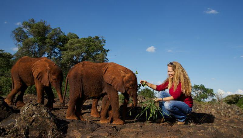David Sheldrick Wildlife Trust, DSWT, orphan elephants, Kenya, elephants orphanage