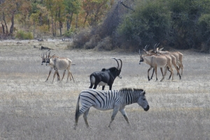 Mahango Game Park, Caprivi Strip, Namibia