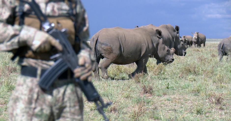 Hume army, rhinos, horn farming, South Africa