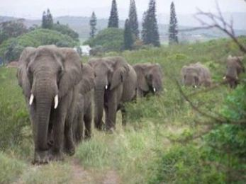 elephants, Thula Thula, The Elephant Whisperer